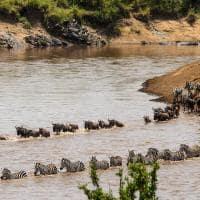 Rio Mara, Grande Migração,Tanzânia e Quênia