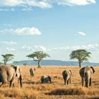 Safári na Tanzânia - Elefantes