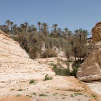 Oásis em meio ao Saara - Tunísia.