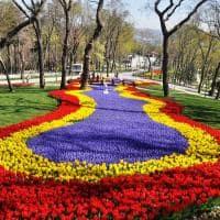 Tulipas na primavera do Emirgan Park - Istambul, Turquia.
