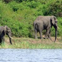 canal kazinga elefantes
