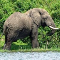 elefante canal kazinga