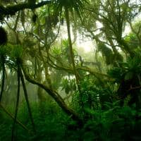 Uganda floresta